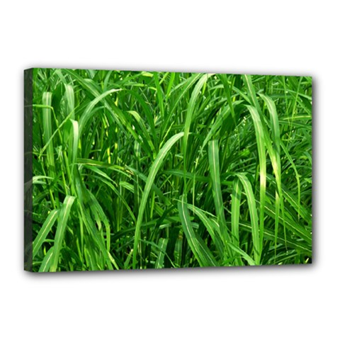Grass Canvas 18  x 12  (Framed)