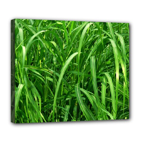 Grass Deluxe Canvas 24  x 20  (Framed)