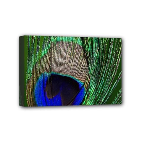 Peacock Mini Canvas 6  x 4  (Framed)