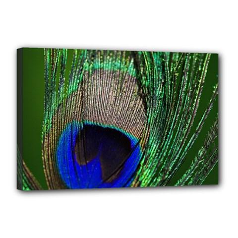 Peacock Canvas 18  X 12  (framed)
