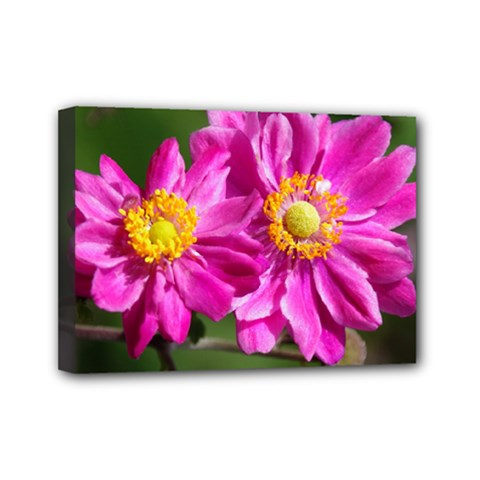 Flower Mini Canvas 7  x 5  (Framed)