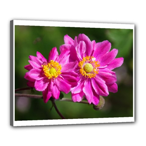 Flower Canvas 20  x 16  (Framed)