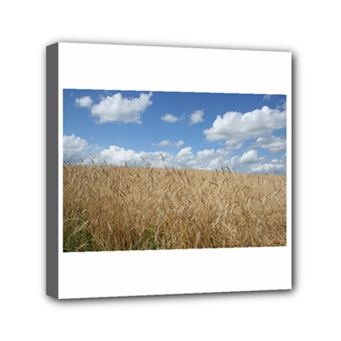 Grain and Sky Mini Canvas 6  x 6  (Framed)
