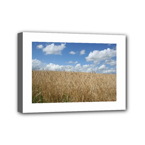 Grain and Sky Mini Canvas 7  x 5  (Framed)