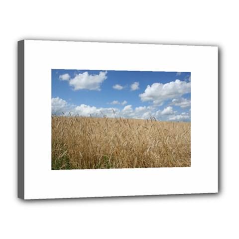 Grain and Sky Canvas 16  x 12  (Framed)