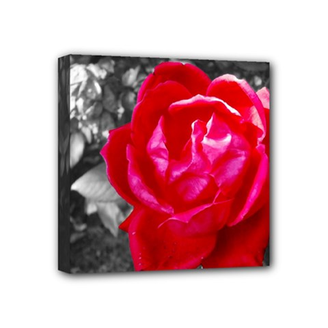 Red Rose Mini Canvas 4  X 4  (framed)
