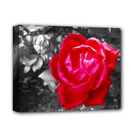 Red Rose Deluxe Canvas 14  x 11  (Framed)