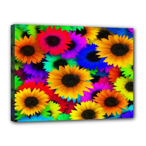 Colorful Sunflowers Canvas 16  X 12  (framed)