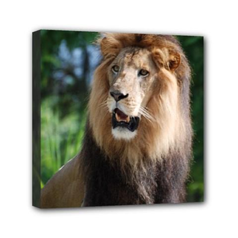 Regal Lion Mini Canvas 6  x 6  (Framed)
