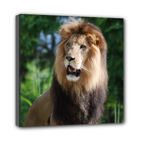 Regal Lion Mini Canvas 8  x 8  (Framed)
