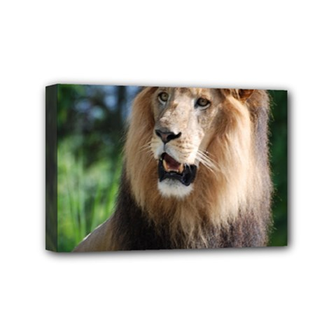 Regal Lion Mini Canvas 6  x 4  (Framed)