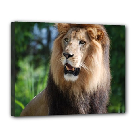 Regal Lion Canvas 14  x 11  (Framed)