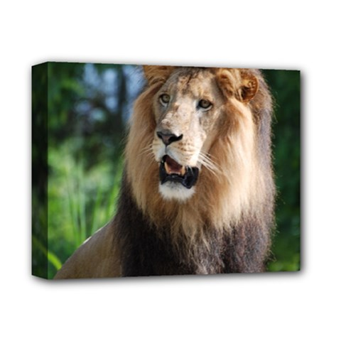 Regal Lion Deluxe Canvas 14  x 11  (Framed)
