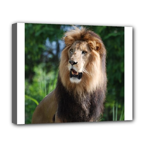 Regal Lion Deluxe Canvas 20  x 16  (Framed)
