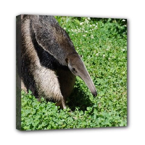 Giant Anteater Mini Canvas 8  x 8  (Framed)