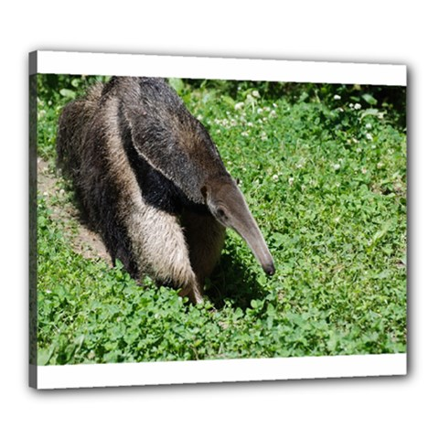 Giant Anteater Canvas 24  x 20  (Framed)