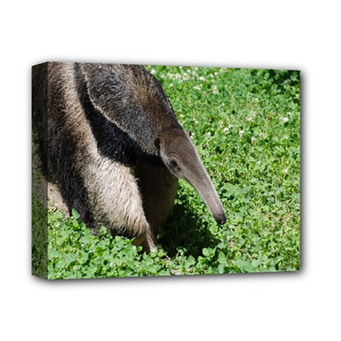 Giant Anteater Deluxe Canvas 14  X 11  (framed)