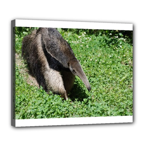 Giant Anteater Deluxe Canvas 24  x 20  (Framed)