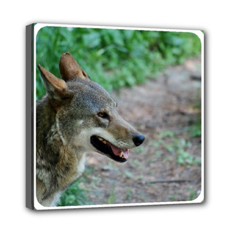 Red Wolf Mini Canvas 8  x 8  (Framed)