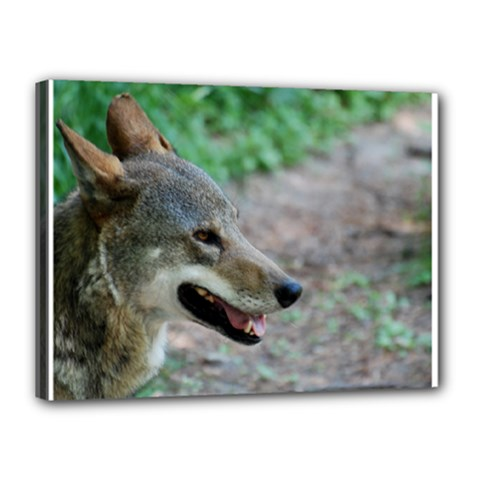 Red Wolf Canvas 16  X 12  (framed)