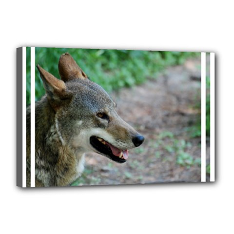 Red Wolf Canvas 18  x 12  (Framed)