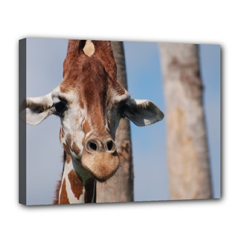Cute Giraffe Canvas 14  x 11  (Framed)