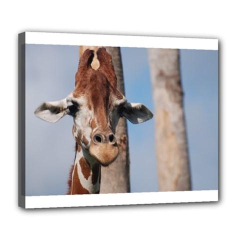 Cute Giraffe Deluxe Canvas 24  X 20  (framed)