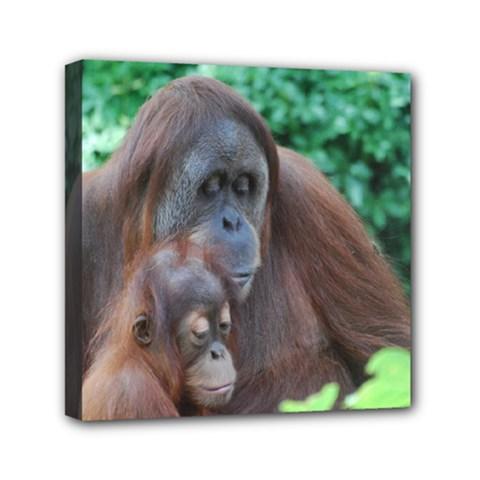 Orangutan Family Mini Canvas 6  x 6  (Framed)