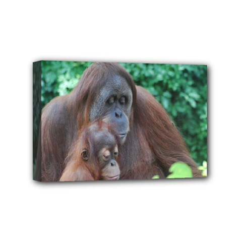 Orangutan Family Mini Canvas 6  x 4  (Framed)