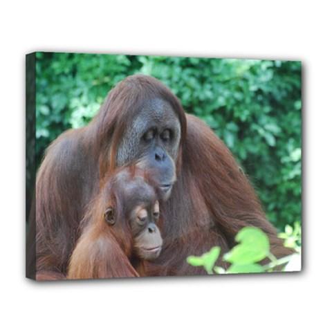 Orangutan Family Canvas 14  X 11  (framed)