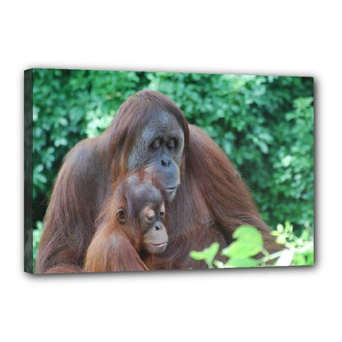 Orangutan Family Canvas 18  x 12  (Framed)