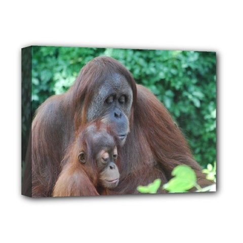 Orangutan Family Deluxe Canvas 16  X 12  (framed)