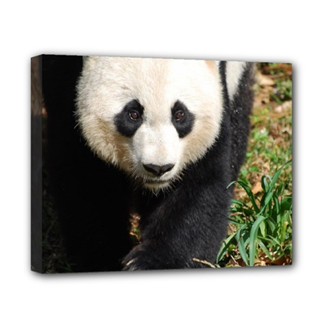 Giant Panda Canvas 10  x 8  (Framed)