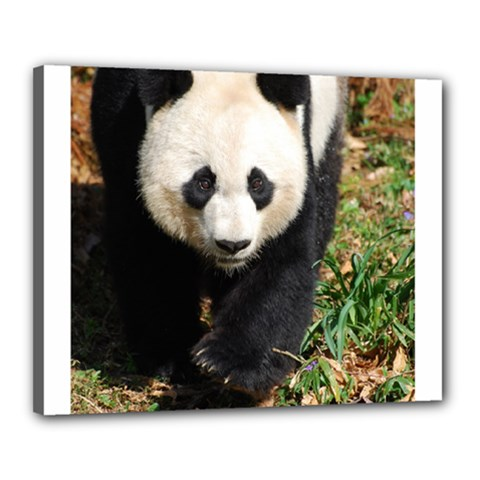 Giant Panda Canvas 20  X 16  (framed)