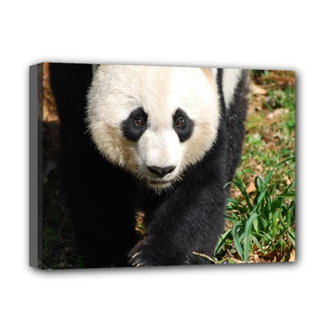 Giant Panda Deluxe Canvas 16  x 12  (Framed)