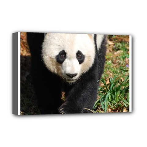 Giant Panda Deluxe Canvas 18  X 12  (framed)