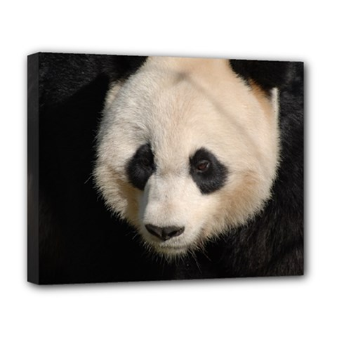 Adorable Panda Deluxe Canvas 20  X 16  (framed)