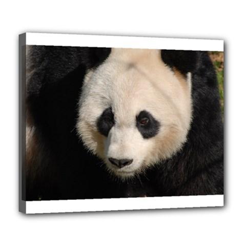 Adorable Panda Deluxe Canvas 24  x 20  (Framed)