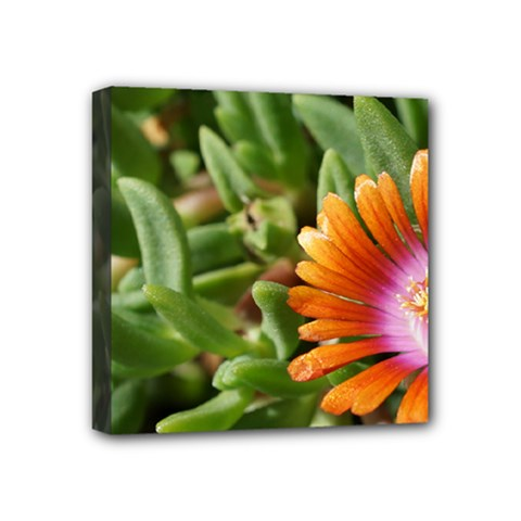 Iceplant2 Mini Canvas 4  x 4  (Framed)