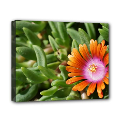 Iceplant2 Canvas 10  X 8  (framed)