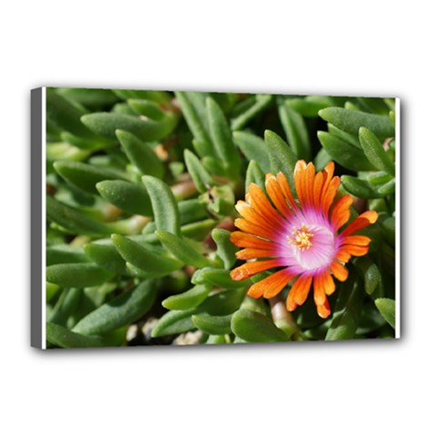 Iceplant2 Canvas 18  x 12  (Framed)