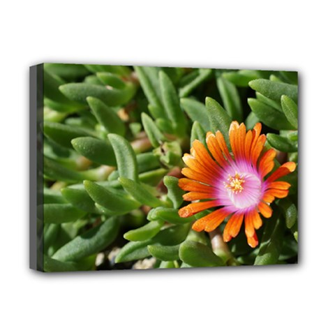 Iceplant2 Deluxe Canvas 16  x 12  (Framed)