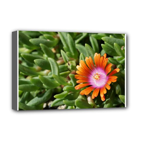 Iceplant2 Deluxe Canvas 18  x 12  (Framed)