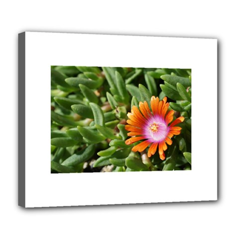 Iceplant2 Deluxe Canvas 24  x 20  (Framed)