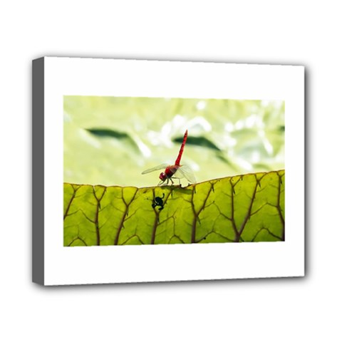 Dragonfly Canvas 10  X 8  (framed)