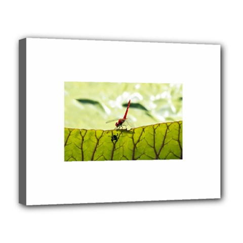 Dragonfly Canvas 14  X 11  (framed)