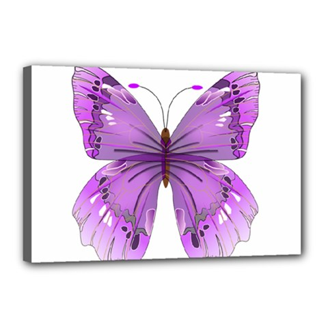 Purple Awareness Butterfly Canvas 18  X 12  (framed)