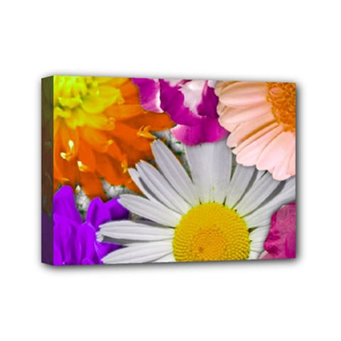 Lovely Flowers,purple Mini Canvas 7  x 5  (Framed)