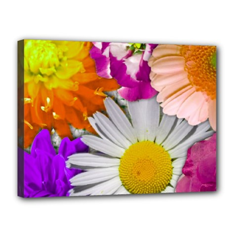 Lovely Flowers,purple Canvas 16  x 12  (Framed)
