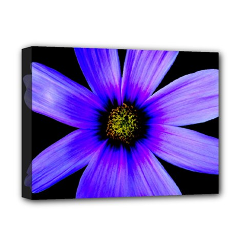 Purple Bloom Deluxe Canvas 16  x 12  (Framed)